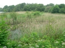 Reed Bed Enhancement (After)