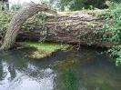 woody debris_3