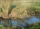 Hawley Meadows 20-03-12_27