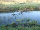 Hawley Meadows 20-03-12_28