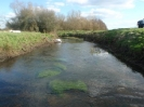 Hawley Meadows 20-03-12_2