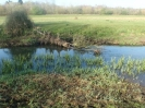 Hawley Meadows 20-03-12_37