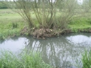 Hawley Meadows 20-03-12_42